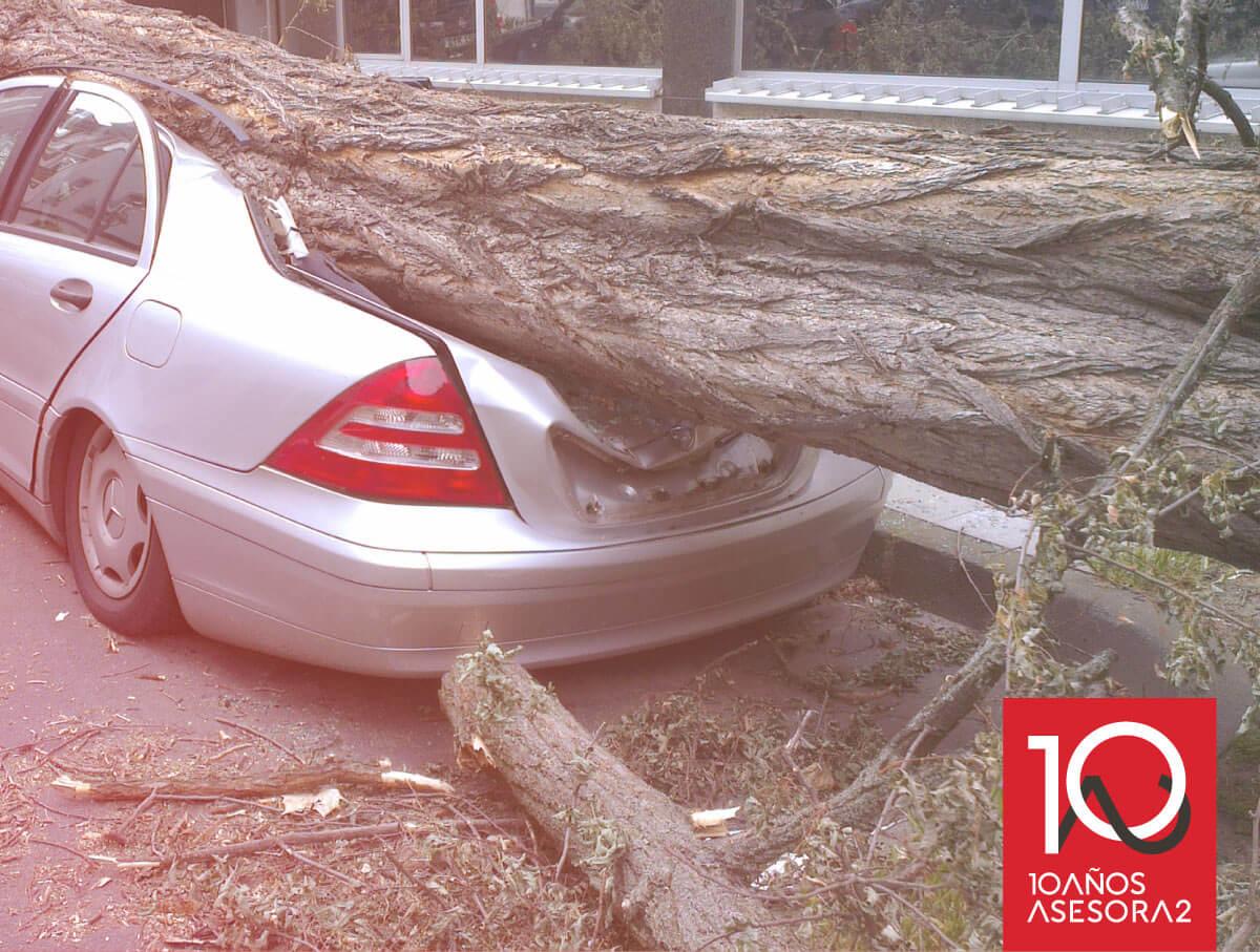 Caso de éxito de Asesora2 en una indemnización por caída de árbol sobre coche